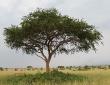 Afrika...