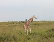 Giraffen-Bekanntschaft